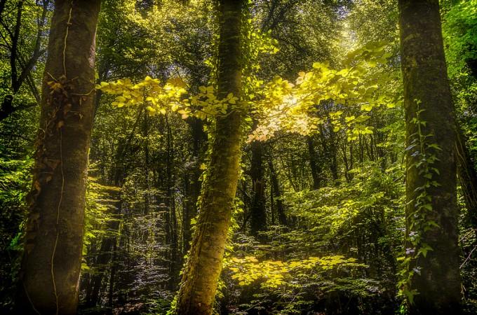 Navarra promociona con ayudas fiscales el desarrollo de la biomasa
