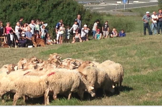 Navarra anula la leche assaf en el Queso Roncal