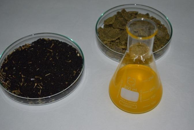 Semillas, aceite y torta de colza