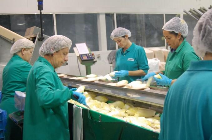 Salud organiza un curso para mejorar la seguridad laboral en el sector conservero