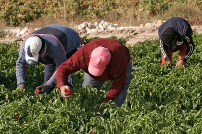 El Gobierno de Navarra reduce los módulos de tributación para agricultores y ganaderos
