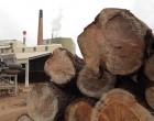 La madera generó 9,8 millones de euros en Navarra el año pasado