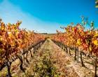 """""""La imagen del vino de Navarra no es la que debería ser"""""""
