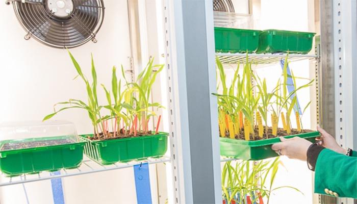 laboratorio-plantas
