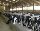 Navarra promueve un encuentro para atajar la crisis del sector lácteo