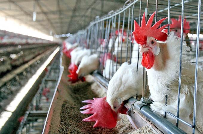 El BEI cuadriplica en un año su ayuda al sector agroalimentario local