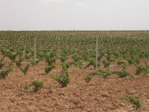 Plantacion nueva y postes 2_Villanueva