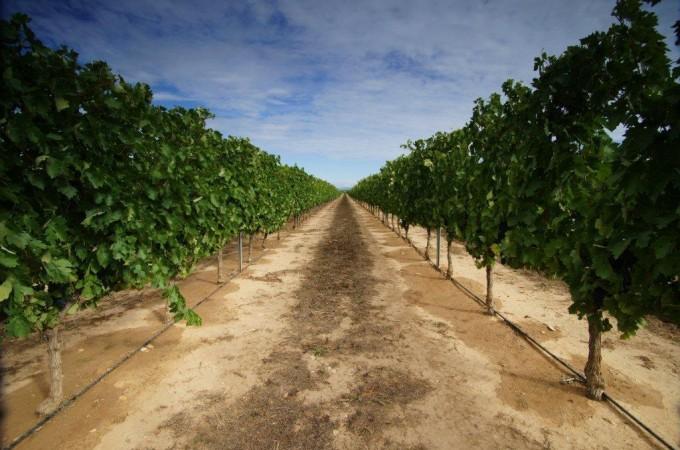 1,2 millones de euros para el viñedo navarro