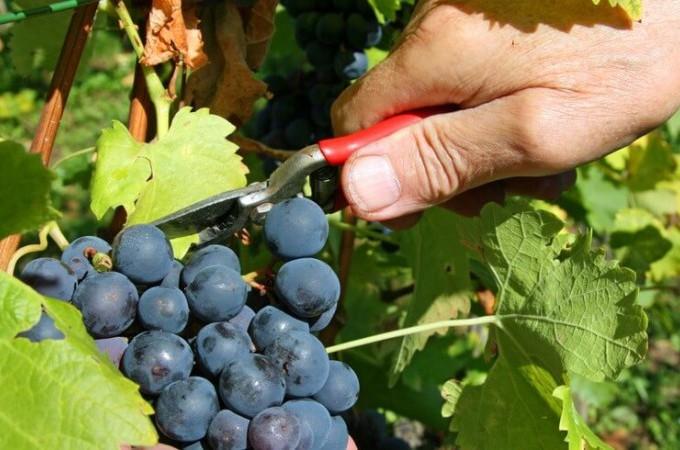 """El sector vitivinícola y sus """"revoluciones pendientes"""", en 'Winetech Forum 2016′"""