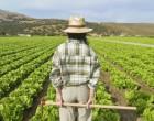 Navarra promueve la agricultura ecológica con 6,3 M. de €