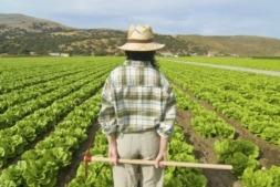 joven agricultor, agricultura