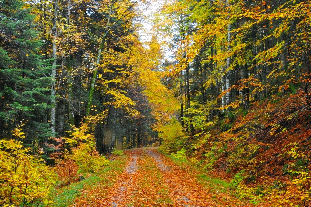 'Perderse' en la Selva de Irati es una experiencia muy recomendable para vivir el otoño en Navarra.