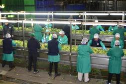Trabajadores en una línea de verduras de la división de conservas del Grupo AN.