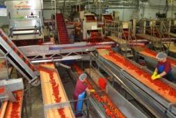 La producción del sector agroalimentario retrocedió el 4,9% en agosto.