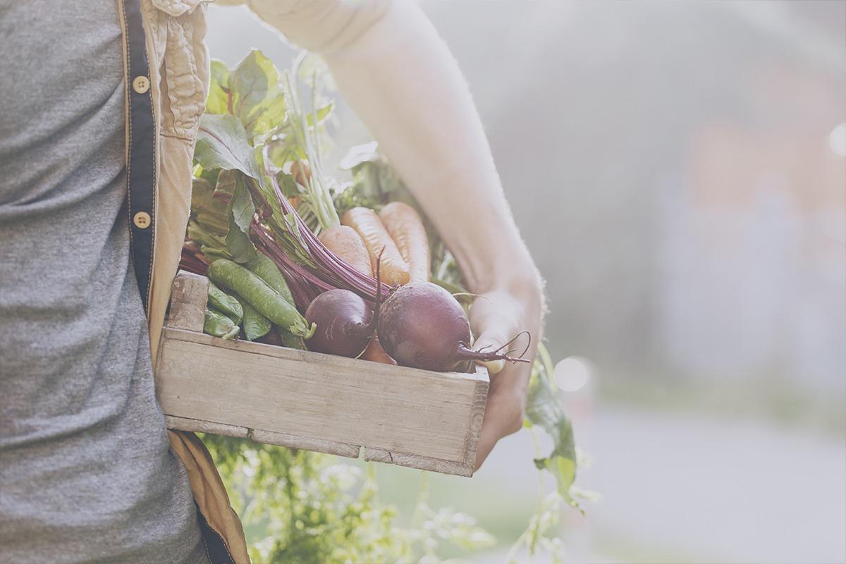hablando-gastronomia-verduras