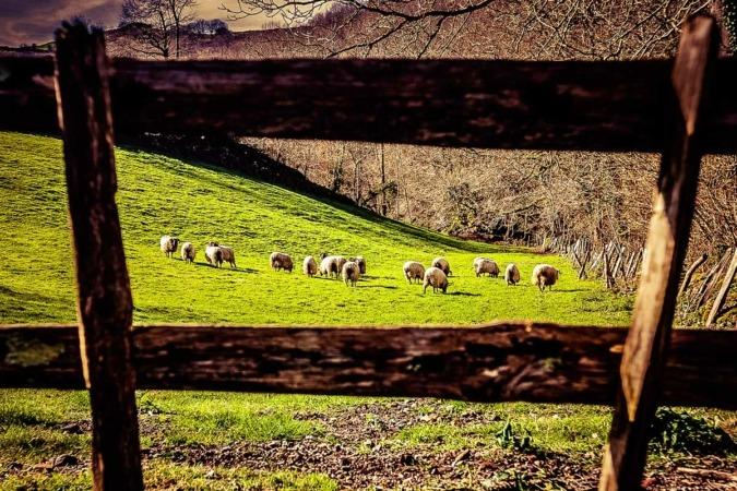 Pastos en la zona de Erratzu, en el valle de Baztan.