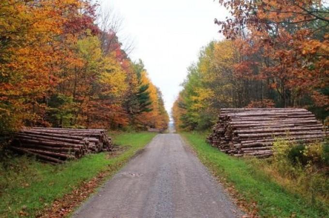 Navarra, tercera región con más madera subastada en 2016