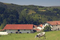 Vaca Kaiku