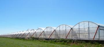 Nuevos invernaderos Vegetales Línea Verde 1