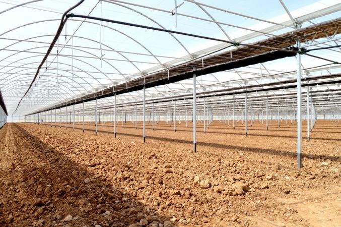 Imagen de nuevos invernaderos de Vegetales Línea Verde