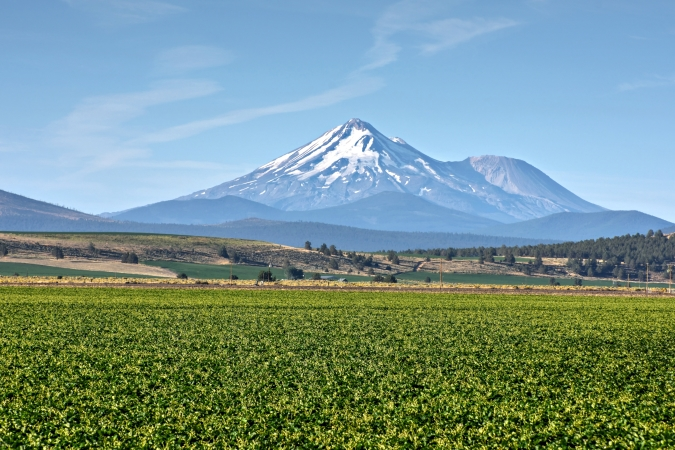 Imagen del Vivero que la empresa norteamericana NorCal, adquirida por Planasa, tiene en California.