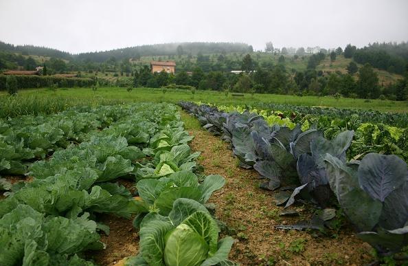 Vista panorámica de una plantación.