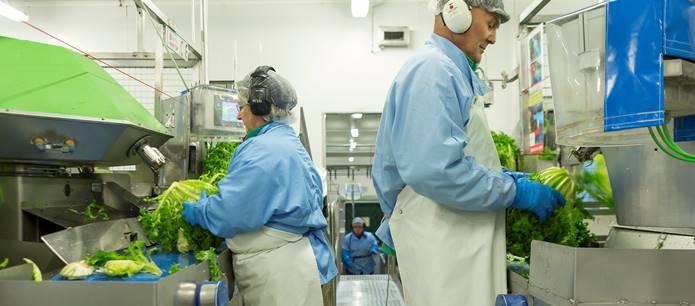 Línea de producción de Ensaladas Completas de Florette en Arguedas