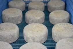 Reconocimiento internacional a dos queserías navarras pertenecientes a Reyno Gourmet