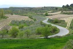 Navarra quiere ser pionera en regular el tamaño máximo de las explotaciones ganaderas para lograr un modelo sostenible, respetuoso con el medio ambiente y que evite riesgos epidemiológicos.