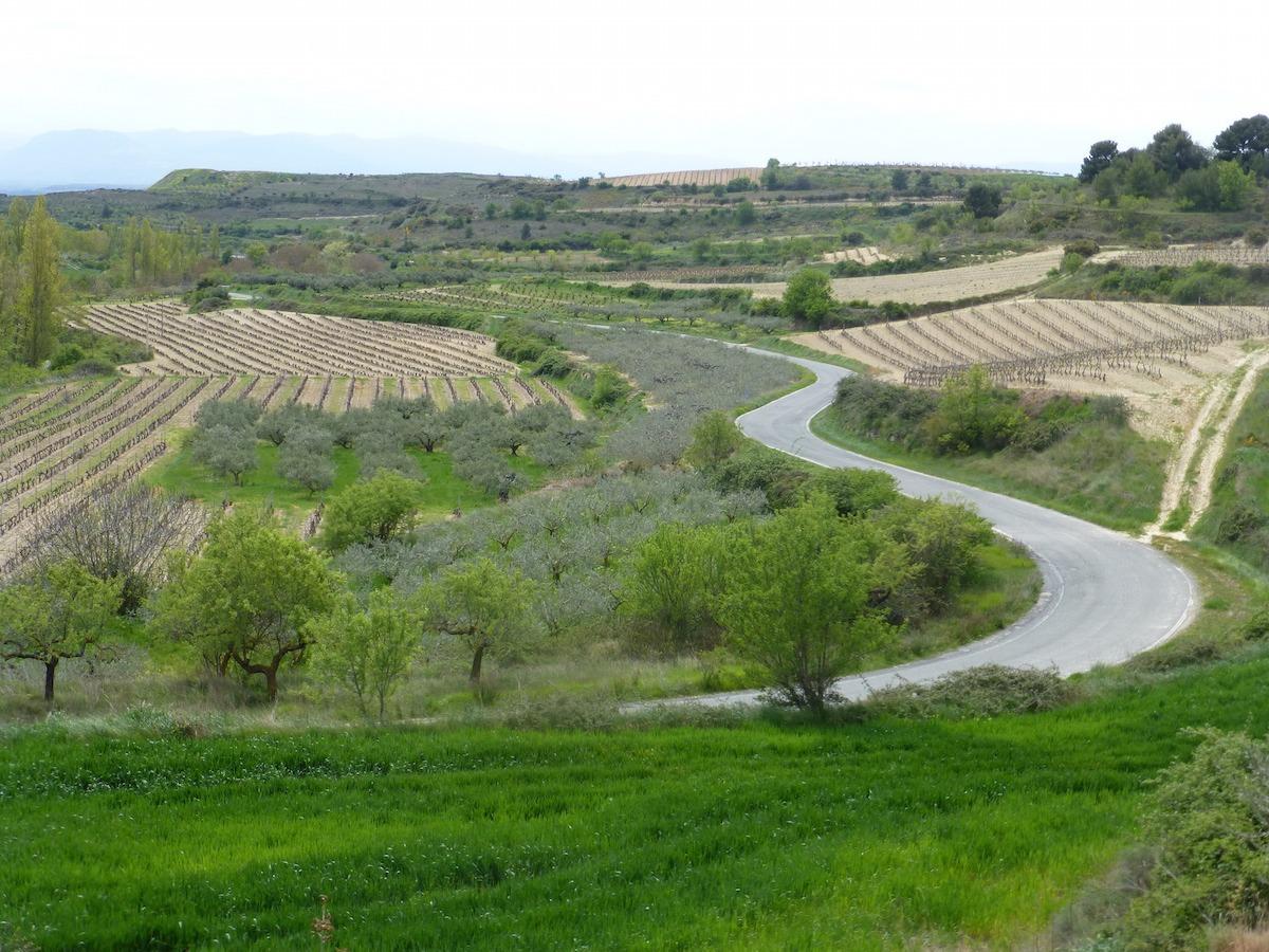 Paisaje-Navarra-Biodiversidad-Campos