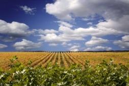 Imagen de un viñedo DO Navarra