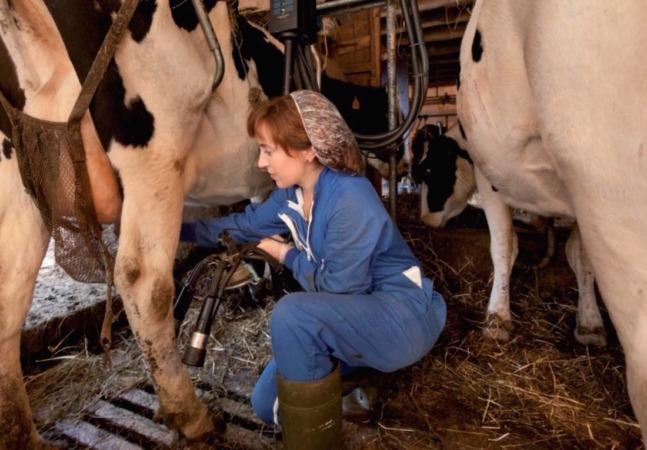 Una mujer ganadera, durante el proceso de ordeño de sus vacas.