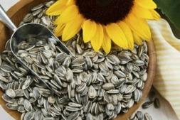 Pipas de girasol tostadas y saladas, objeto de investigación entre la UPNA y la empresa Grefusa.