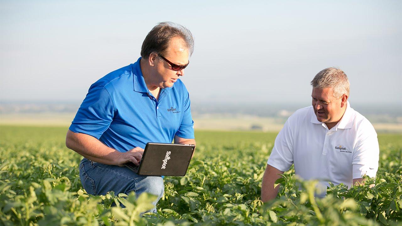 Operarios de J.R. Simplot Company trabajando en la mejora de un campo de patatas.