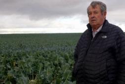 Enrique Castel Ruiz posa en medio de uno de sus campos de alcachofa de Tudela. (FOTOS: Germán Pérez).