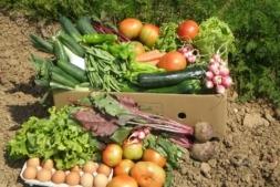 Representación gráfica de algunos de los productos ecológicos que ya se elaboran en la actualidad en Navarra.