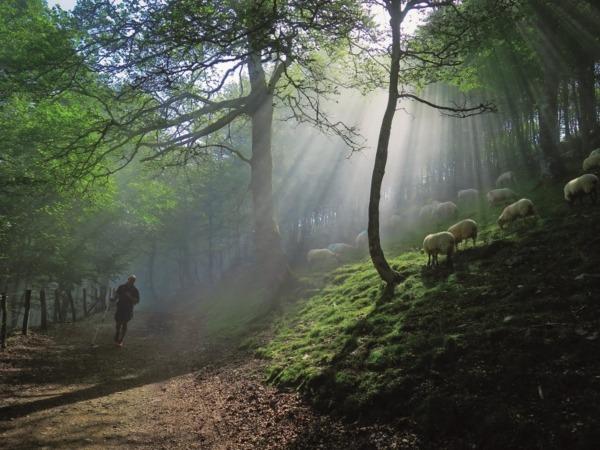 1Premio Bosque de hayas Xabier Arribas Molinero