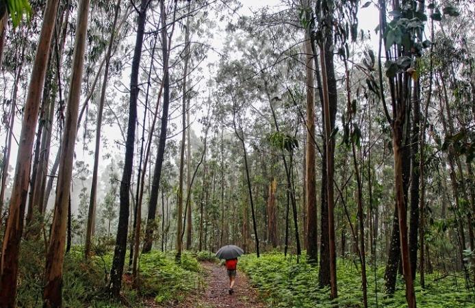 Mencion-honorifica-Camino-entre-eucaliptus-Camino-espiritual-Marga-Campos