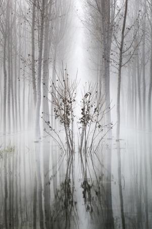 PICTIO-Romanticismo-David Frutos