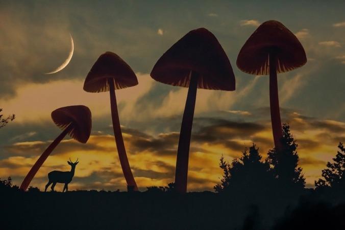 Fotografía de la exposicion PICTIO inspirada en el Surrealismo.
