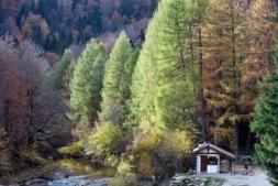 Imagen de la Selva del Irati, uno de los principales atractivos de nuestra región.