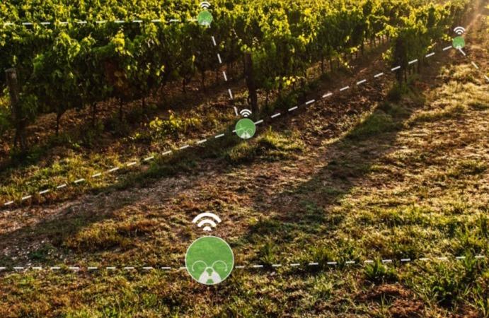 Imagen de cómo actúa detección temprana de brotes de plagas agrícolas de insectos. (FOTO: AgroPestAlert)