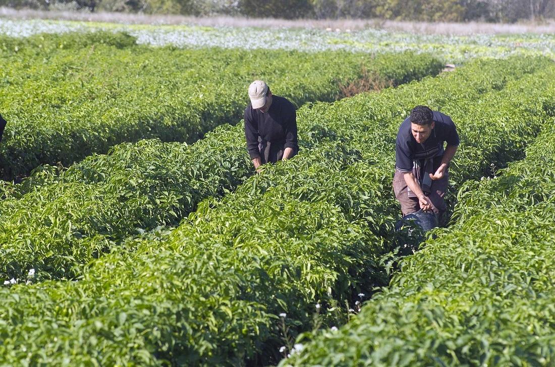 Imagen de una explotación agraria ecológica.