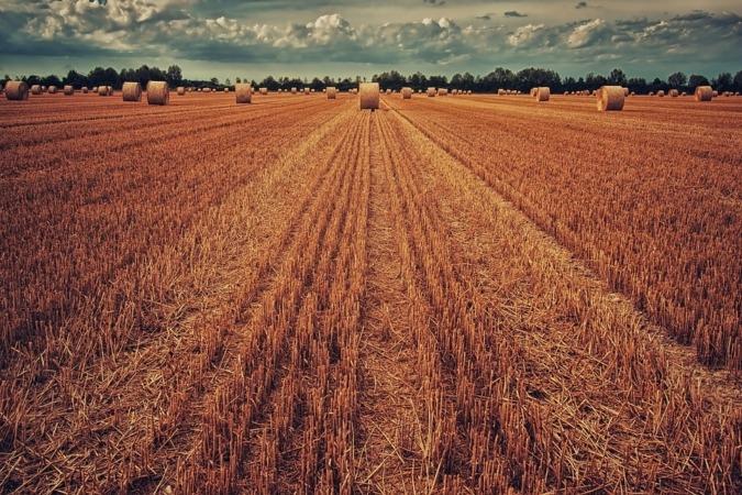 """El próximo encuentro Alimenta Meeting Point analizará en profundidad alguno de los """"grandes retos de futuro"""" a los que se enfrenta el sector agroalimentario."""