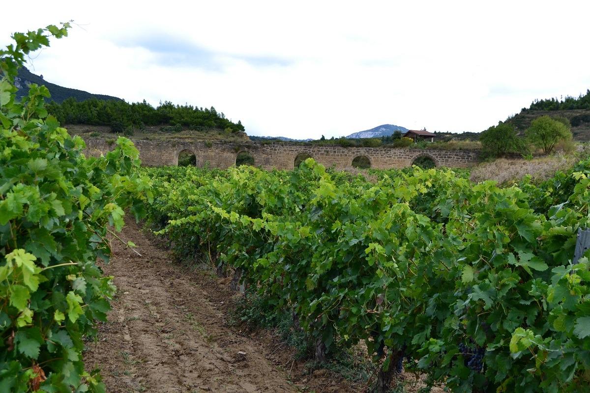 Bodega-Carlos-Moro- EL-ACUEDUCTO
