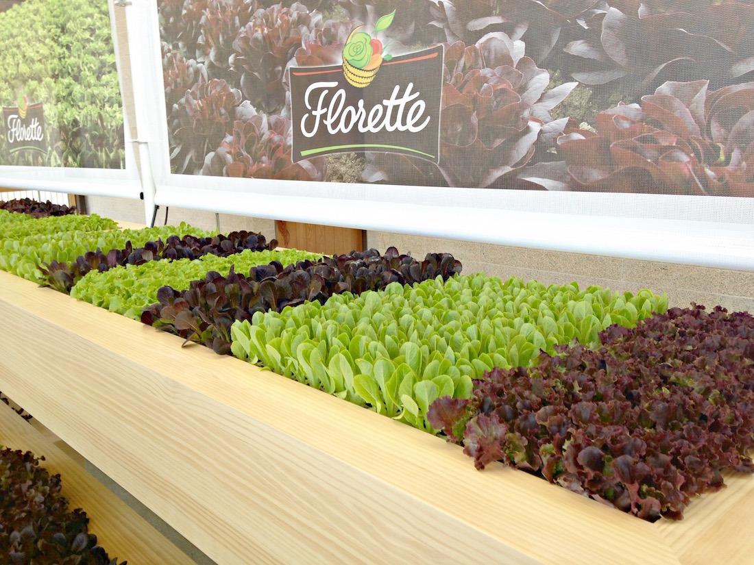 Florette-el-huerto