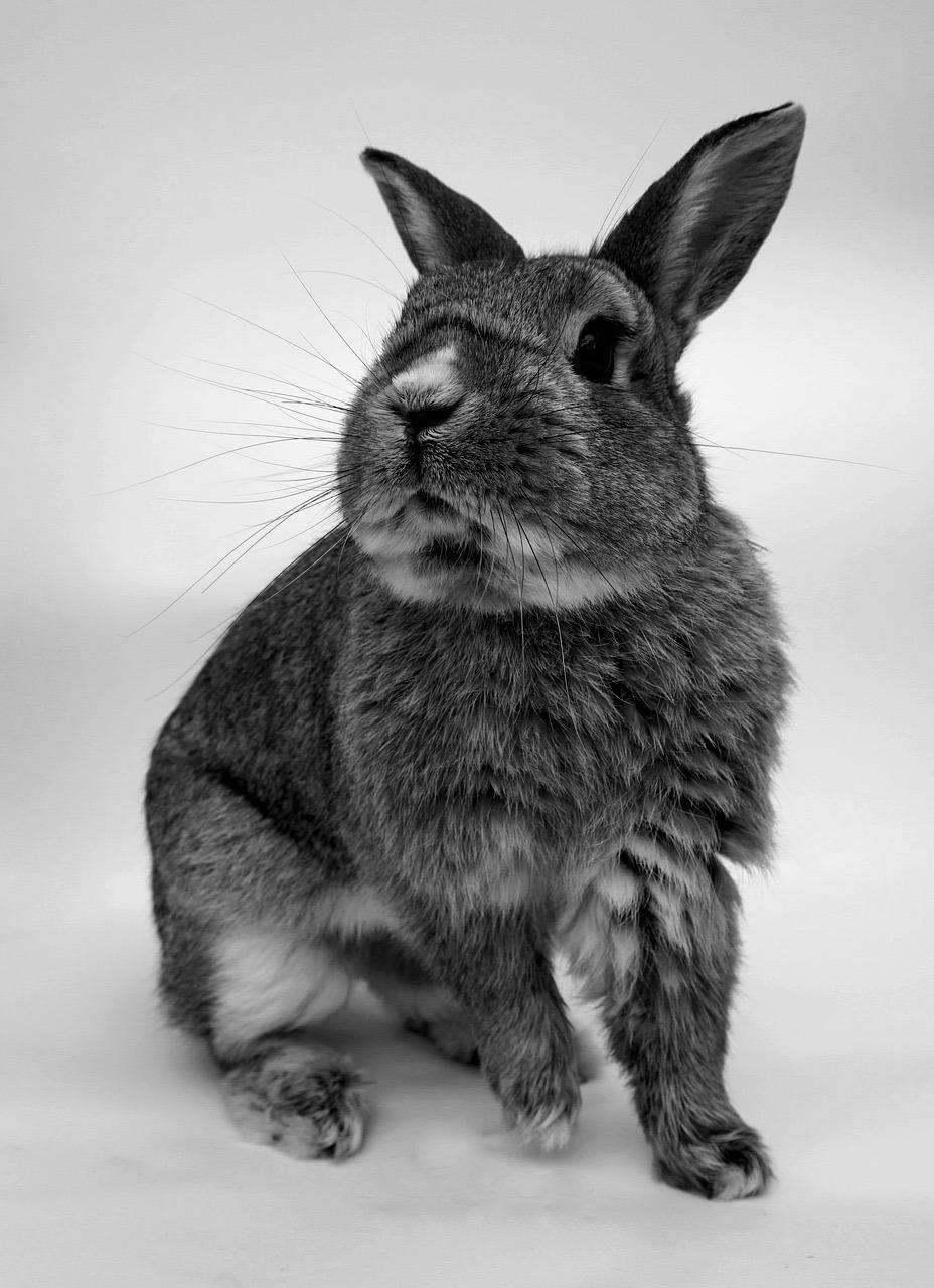 Mascotas-Conejo