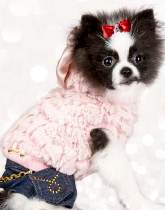 Mascotas-perro-lujo