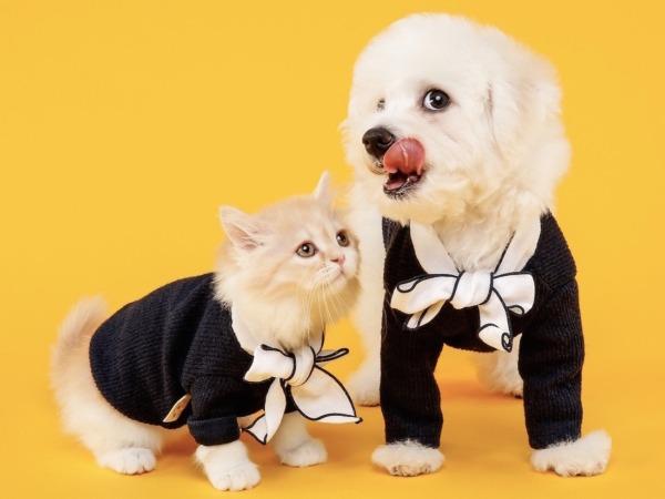 Varios informes señalan que los españoles gastamos de media 1.000 euros al año en nuestras mascotas.