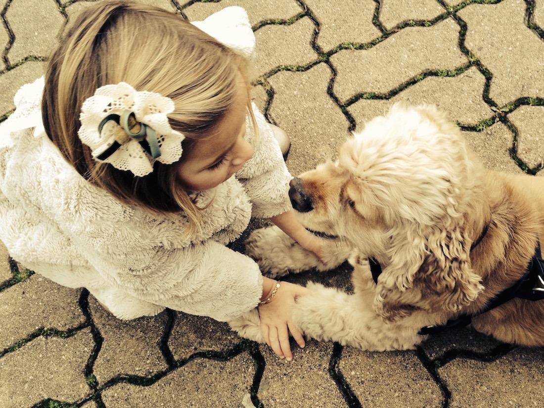 Perro-Mascota-Dilu-3